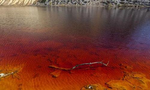 Dokai Bay - Water Pollution